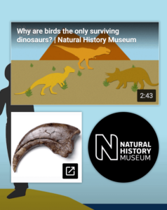 Youtube SEO example of end cards after video for the natural history museum to improve social media SEO
